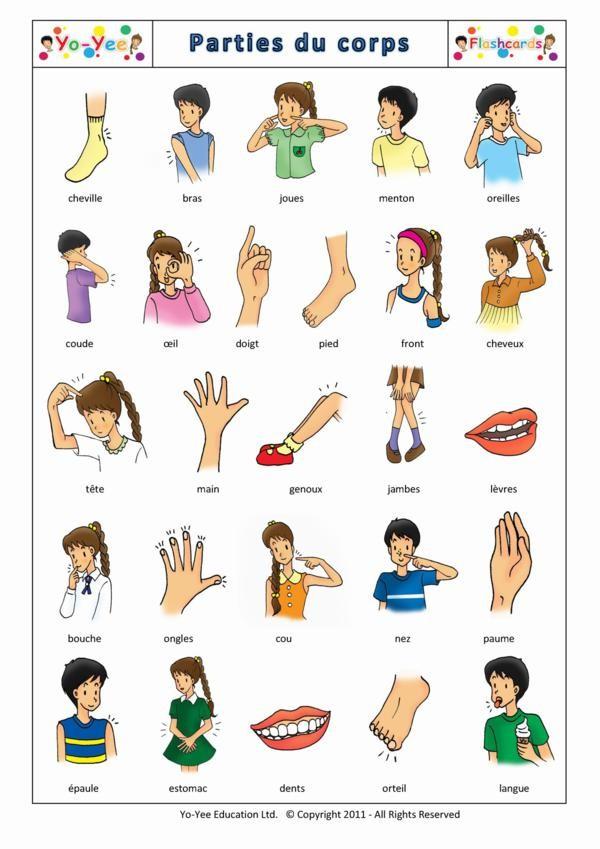 животные по-английски с транскрипцией и переводом в картинках