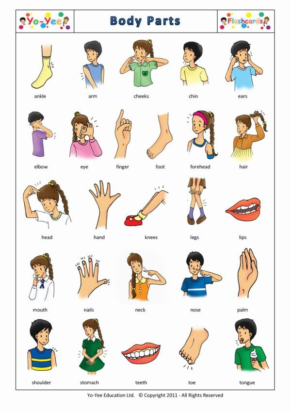 Body Parts flashcards for kids | Partes del cuerpo